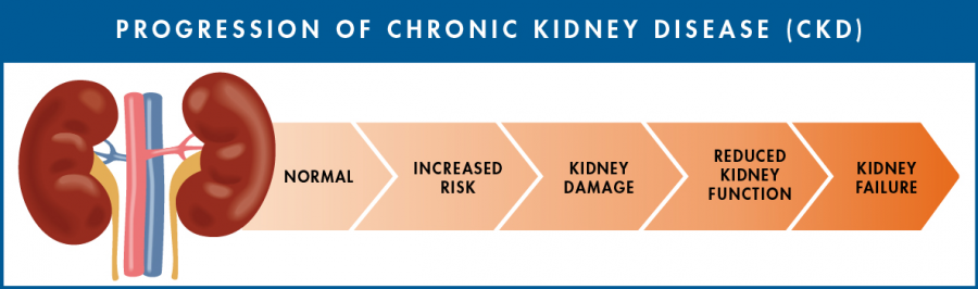 Progression of CKD: Normal - Increased Risk - Kidney Damage - Reduced Kidney Function - Kidney Failure