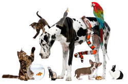 Image of pets: dogs, cats, birds, rabbit, ferret, snake, and hampster,