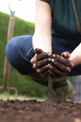 Image of someone working the soil.