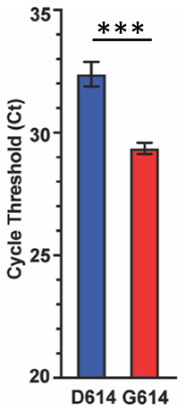 Cycle thresholds (Ct) for D614 and G614 in Houston. Lower Ct means greater viral RNA and more viral burden.