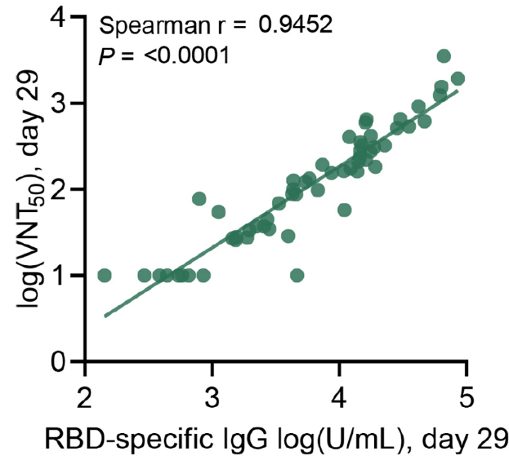 Correlation of RBD-specific IgG titers versus VNT50 from day 29 sera of all immunized patients.