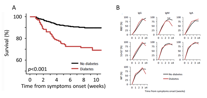 A: Survival rates in persons with diabetes and without diabetes. B: Timing and amplitude of antibody response to SARS-CoV-2 among persons with diabetes and without diabetes.