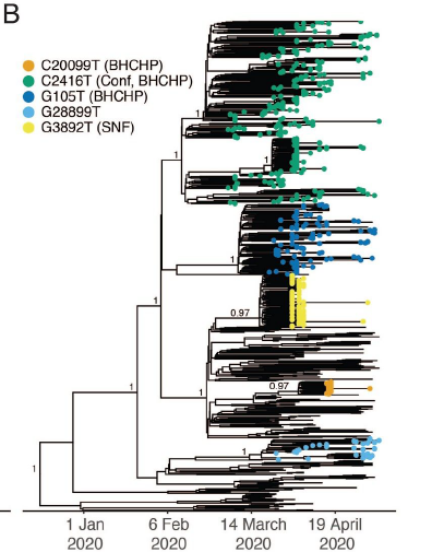 Phylogenetic tree demonstrating superspreading events from a conference (Conf) that spread to a homeless shelter (BHCHP) (C2416T) and had sustained transmission vs independent non-sustained superspreading events in the same shelter (G105T, C20099T) and a skilled nursing facility (G2892T).