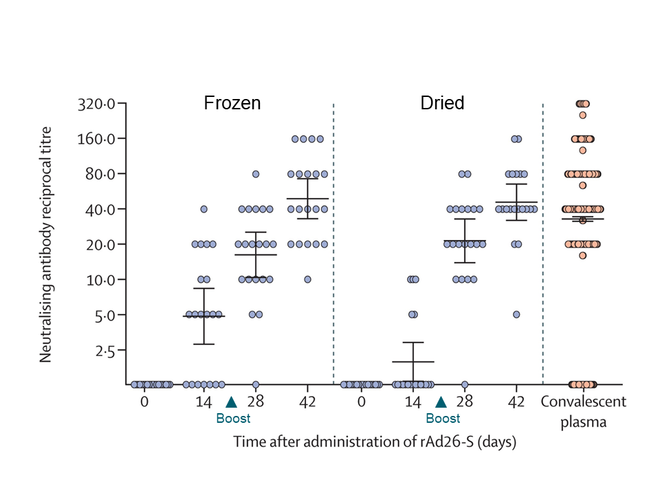 Neutralizing antibody levels at days after the first vaccine administration, with the heterologous boost of the other Ad-S at day 21 compared to convalescent plasma from individuals recovered COVID-19.