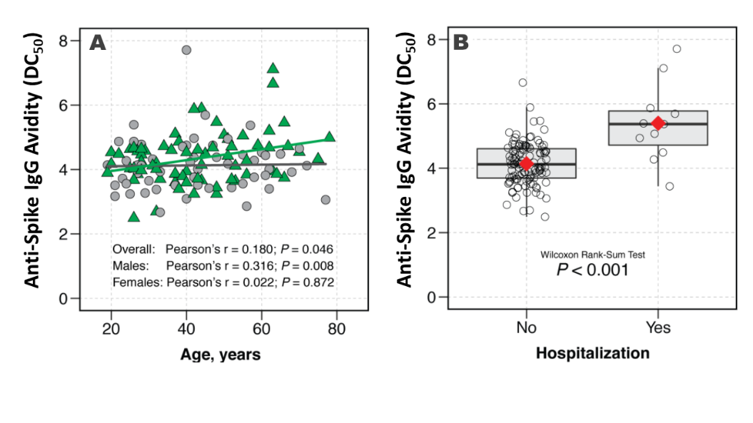 Cross-sectional sampling of recovered hospitalized patients by age tested for IgG antibody avidity against the SARS-CoV-2 spike by age (A) and hospitalization status (B).