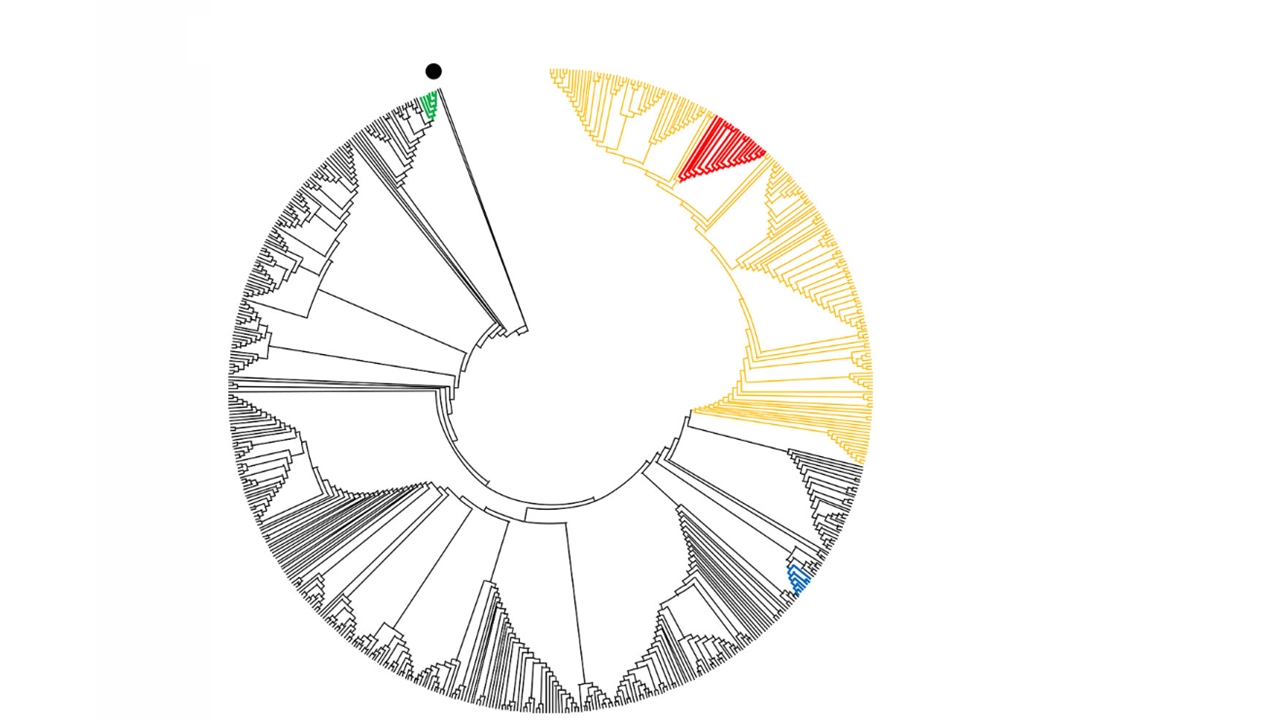 Global phylogenetic tree showing relationship between genome sequences of SARS-CoV-2 from mink and humans at 3 mink farms in Denmark, June-July 2020