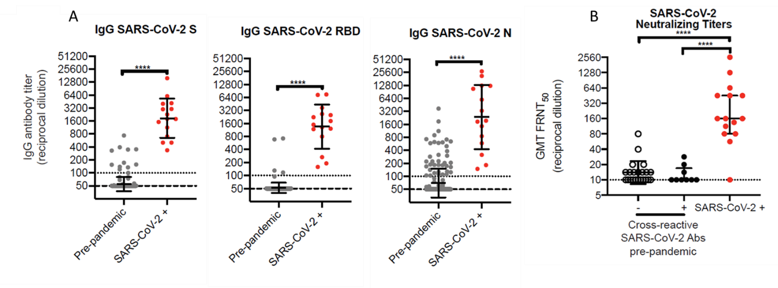 A: IgG antibody titer from pre-pandemic sera or from SARS-CoV-2-positive individuals for S, S-RBD, or N proteins (right to left). B: Serum dilution at which SARS-CoV-2 neutralization is detected for antibody-negative pre-pandemic sera (open circles), antibody-positive pre-pandemic sera (closed circles) or sera from SARS-CoV-2-positive individuals.