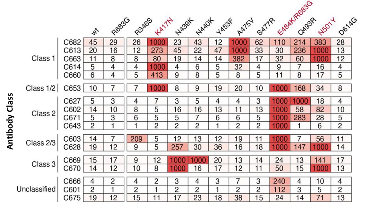 Table of antibody classes and inhibitory concentrations.