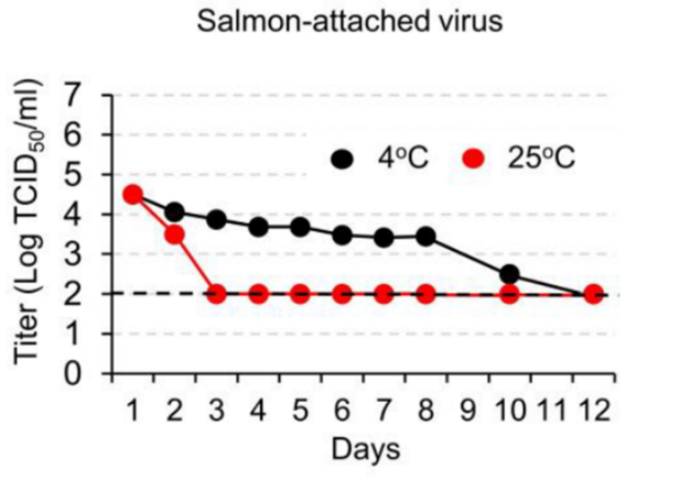 Titer of tissue culture infectious dose of SARS-CoV-2 recovered from virus-treated salmon stored for various lengths of time at 4°C or 25°C.
