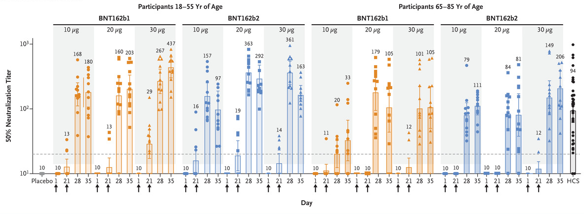 Serum neutralization titers with BNT162b1 and BNT162b2. Arrows indicate days of vaccination. Immune responses in participants.