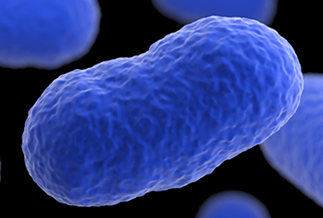The Listeria Initiative   Listeria   CDC