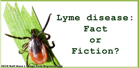 Image: tick, Lyme disease: Fact or Fiction
