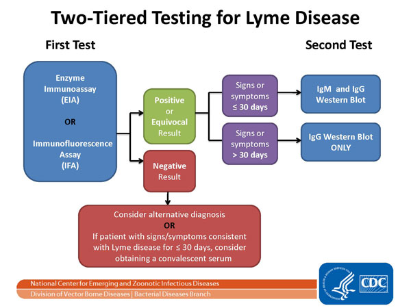 The two-Tier testing decision tree describes the steps required to properly test for Lyme disease.