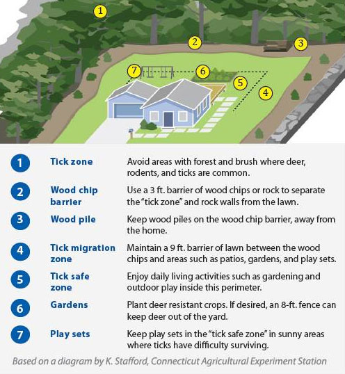 tick free yard tips