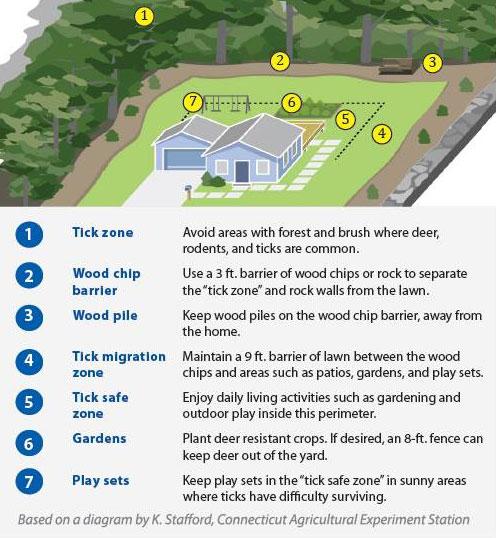 Preventing Ticks In The Yard Lyme Disease Cdc