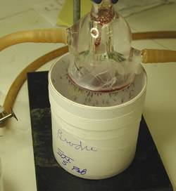 Mosquitoes being fed experimentally using a parafilm membrane; the blood meal is pumped on top of the membrane.