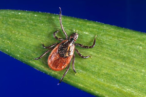 Lyme and other tickborne diseases - Digital Press Kit