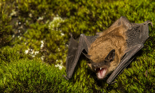 bat in the grass