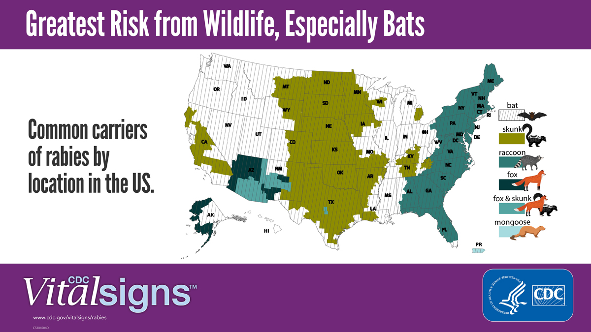 Bats Lead in U.S. Rabies Risk