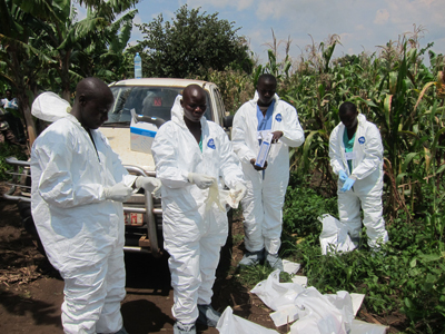 Uganda epidemiologists collect virus samples from the field, to test for deadly Ebola virus.