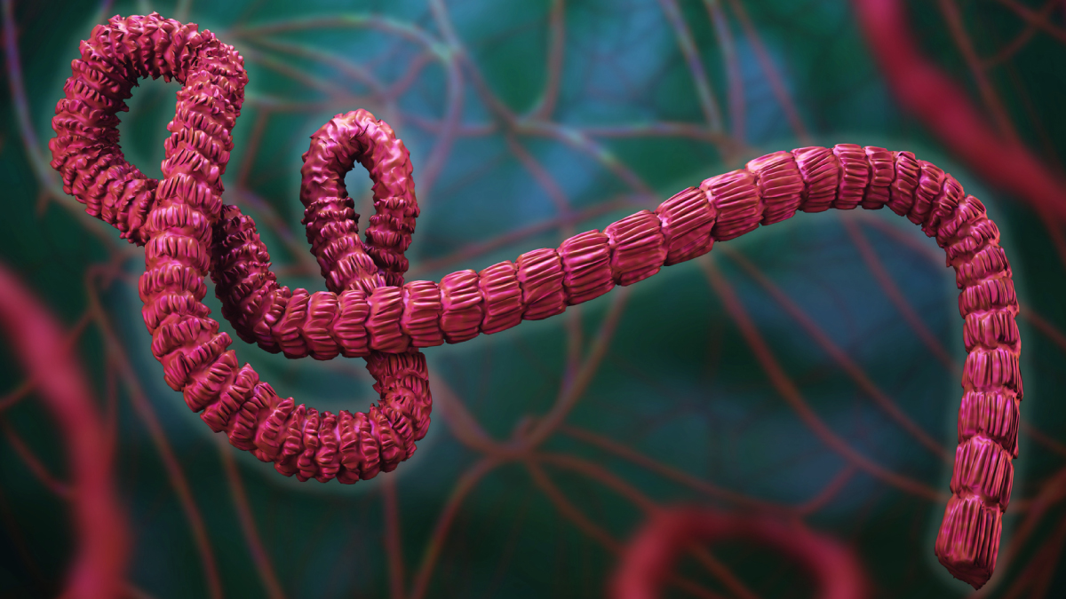The figure shows a three-dimensional illustration of the Ebola virus.