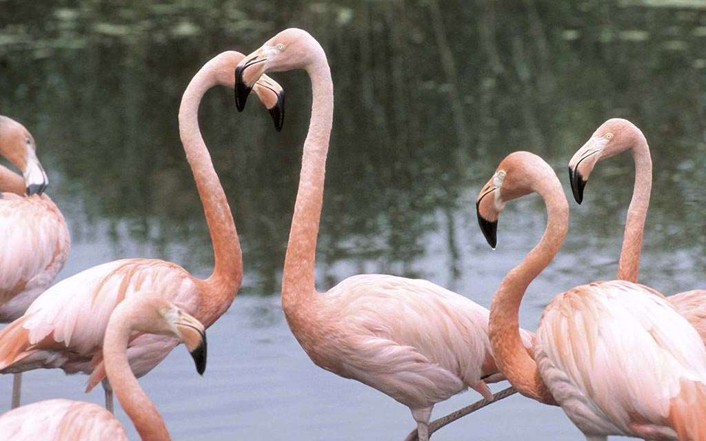 d46b4d67cc Several exotic birds, including flamingos, have died at the Bronx Zoo.