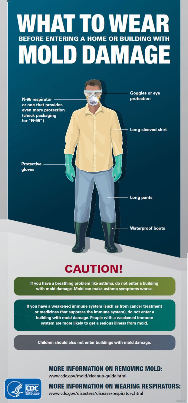 What to Wear Mold Damage