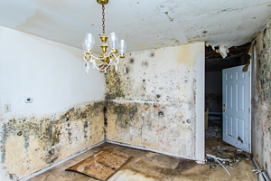 interior room of a home with major flood damage and visible mold
