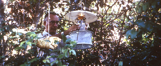 Standard New Jersey light trap is modified to create the CDC light trap, a light-weight and portable mosquito trap to collect samples in swamps and remote areas where electricity is not available