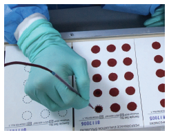 Photo of blood being spotted by hand onto filter paper that will be used in quality assurance and proficiency tests