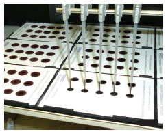 Photo of blood being spotted by use of a robot onto filter paper that will be used in quality assurance and proficiency tests