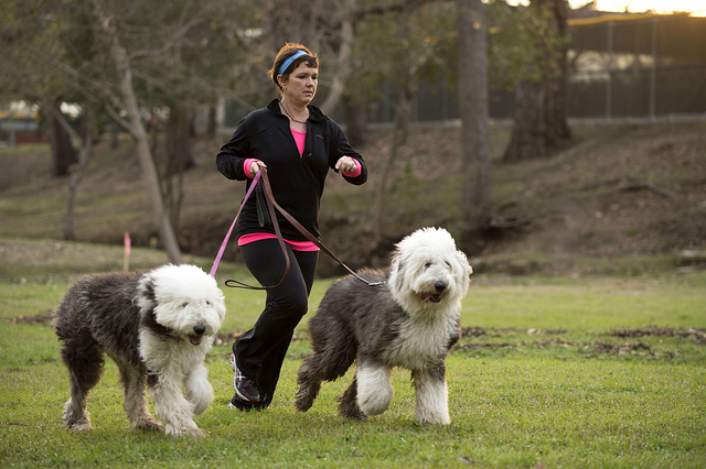 Mary Campise shown running with her Old English Sheepdogs, Marley and Blue.