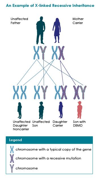 Inheritance Muscular Dystrophy Ncbddd Cdc
