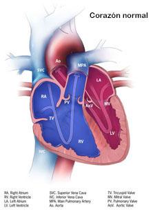 venas del cuello y arterias