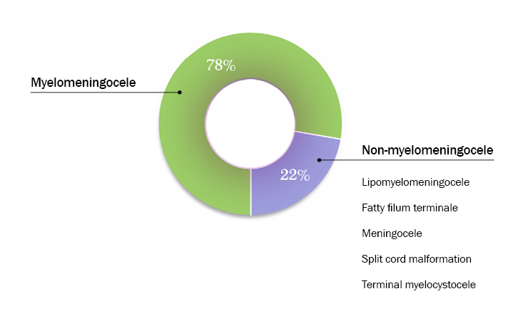 Chart showing type of Spina Bifida, see details above.