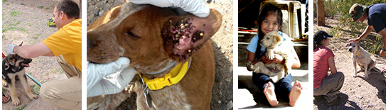 Collage of images: worker checking dog's ear for ticks, dog with ear full of ticks, girl holding her pup, workers and dog with new collar.