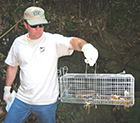 Photo of a man holding a cage with trapped rats.