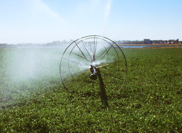 Irrigation sprayer in a field