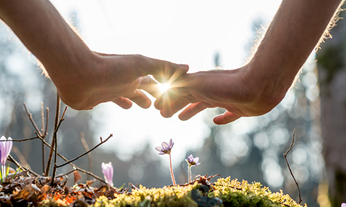 Hands covering small flowers on the ground with sunlight between fingers