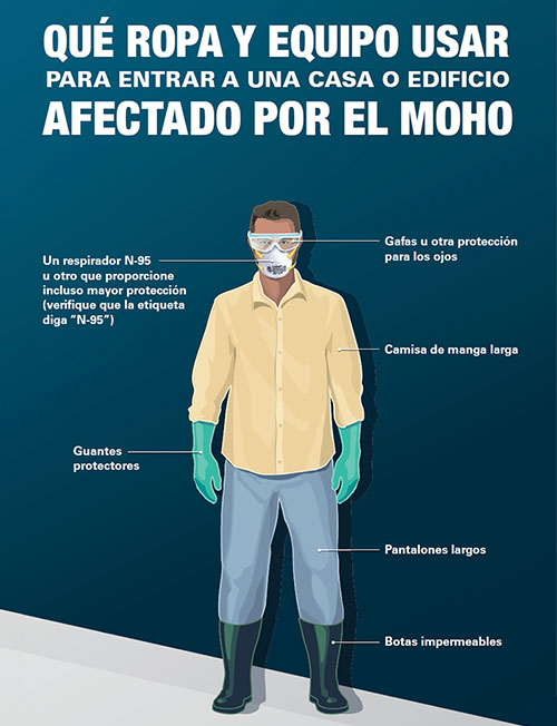 What to Wear Before Entering a Home or Building with Mold Damage Spanish