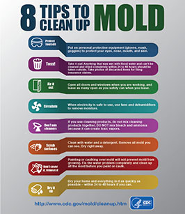 8 tips for mold removal