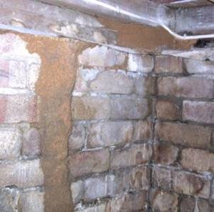 Figure 4.19. Termite Mud Shelter Tube Constructed Over A Brick Foundation