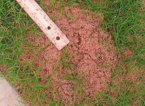 Figure 4.27. Fire Ant Mound