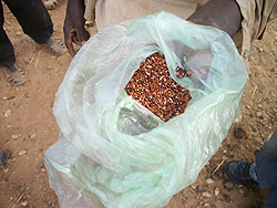 Sorghum grain sample.