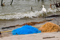 Birds in contaminated ocean water