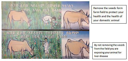 Poster used to educate villagers about livestock. Photo by CDC staff