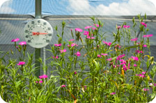 Garden plants with thermometer