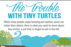 Trouble with Tiny Turtles infographic
