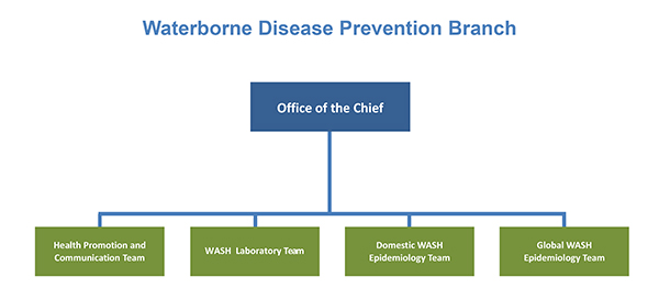 Waterborne Disease Prevention Branch Organizational Chart Organizational Chart: includes Office of the Chief and teams - Health Promotion and Communication, Laboratory WASH, Domestic WASH, and Global WASH