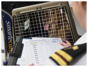 A CDC public health officer checks the rabies vaccination certificate of a dog in a kennel just arrived into the United States. Photo credit to Derek Sakris, CDC.
